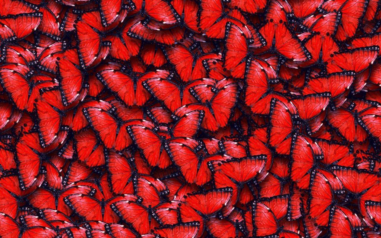 farfalle-rosse
